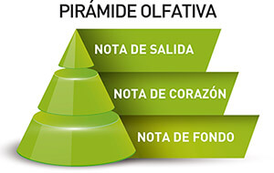 PERFUMES PROUVE PIRAMIDE OLFATIVA NOTA DE CABEZA